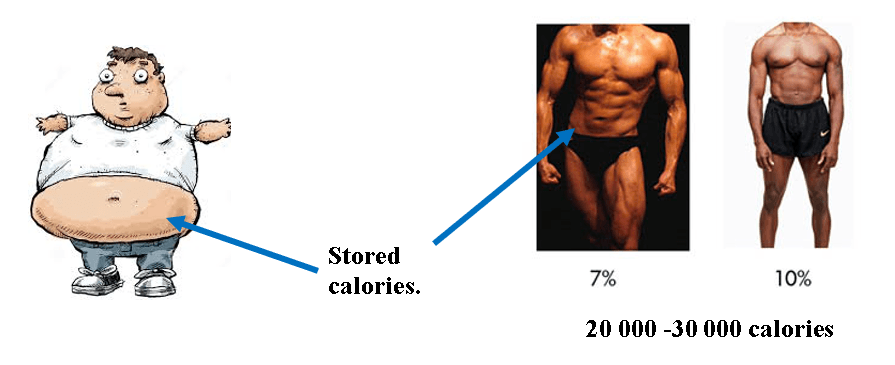 Hormones That Build Muscle Burn Fat At the Same Time - Siim Land