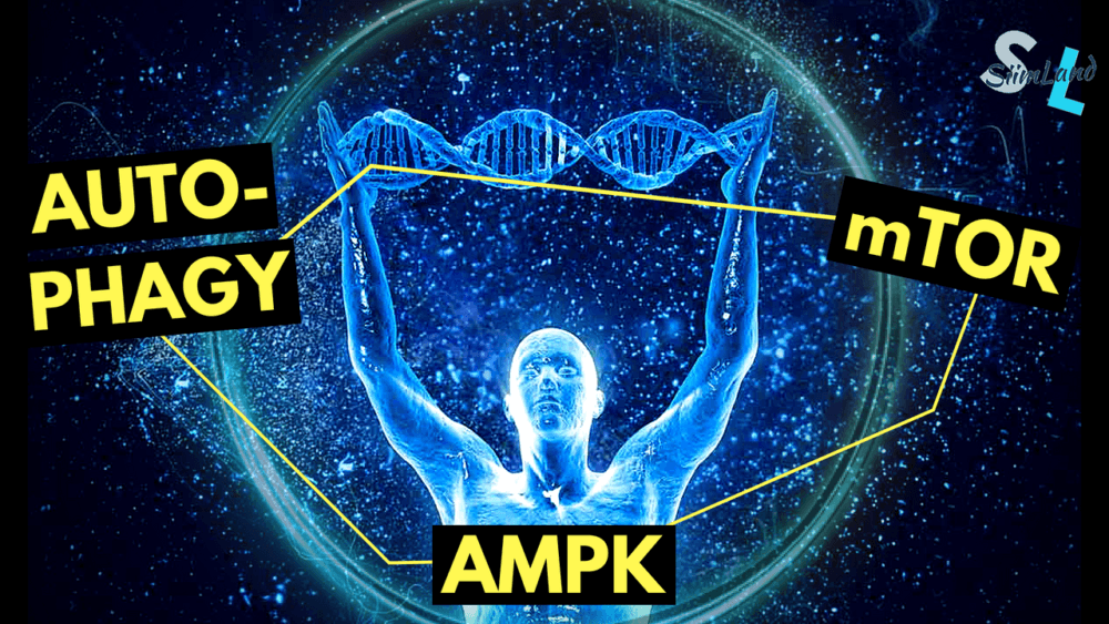 How to Balance Autophagy and mTOR for Longevity and Muscle