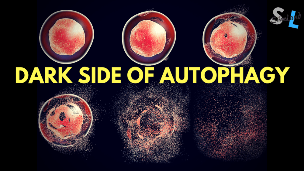 autophagy and cancer development Archives - Siim Land