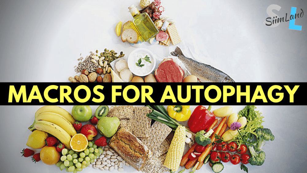 moderate protein diet autophagy